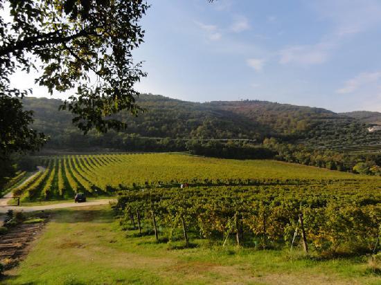 Agriturismo Delo Relais: Stunning location.