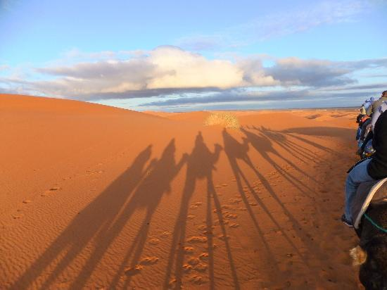 Camel Trekking - Day Tours: Trekking with the camels