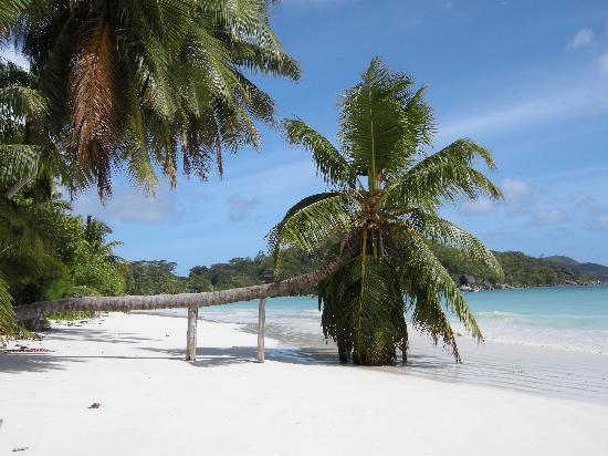 Villa Bananier: la spiaggia vicino l'hotel..