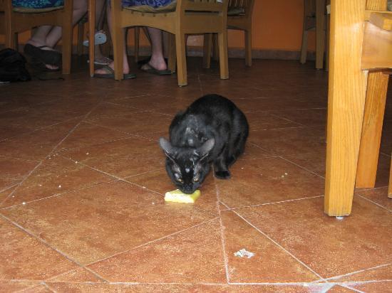 IBEROSTAR Paraiso Del Mar: Stray cats that roam the property
