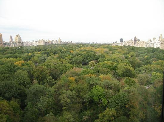 The Ritz-Carlton New York, Central Park : An amazing view to wake up to