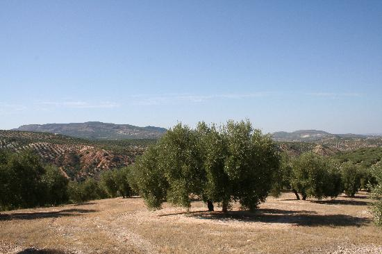 Casa Rosa B&B Spain: Hill with olivetrees behind Casa Rosa