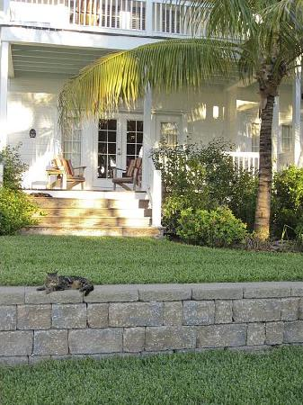 Indigo Reef Marina Homes Resort: Cats on the premises
