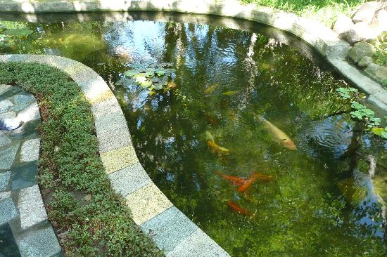 Royal Hotel & Healthcare Resort Quy Nhon: Ruisseau avec poissons du jardin