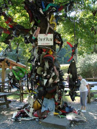 Tree Of Shame With Wrecked Bike Parts From The Dragon Picture Of