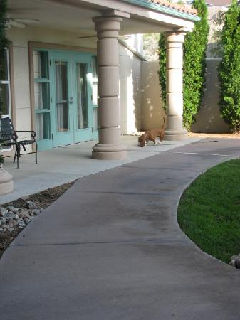 La Quinta Inn & Suites Albuquerque Midtown: Courtyard