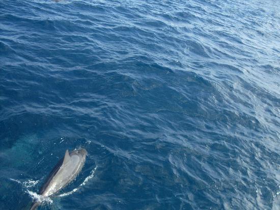 Fernando de Noronha, PE: Dolphin.