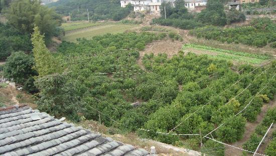 Trippers Carpe Diem Hostel Yangshuo: View from the Terrace 1