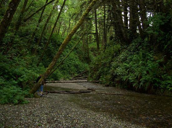 Redwood National Park: Entering Fern Canyon