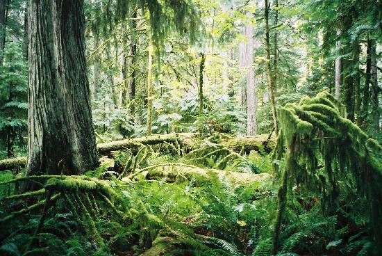 Port Alberni, Canada: An homage to Pacific rain forest !