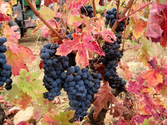 Exquisiteando: La Rioja en Otoño