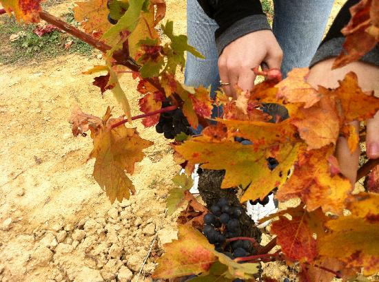 Exquisiteando: Vendimia en Rioja 2010