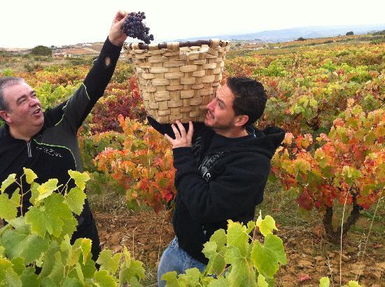 Exquisiteando: Vendimia Rioja 2010