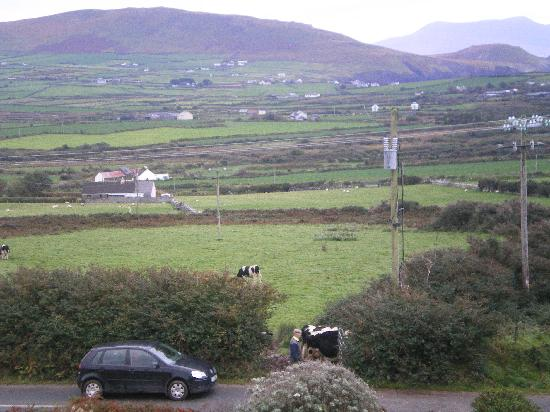 Ballinvounig House: View from room - farmer moving cows