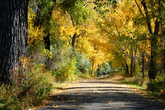 บิลลิงส์, มอนแทนา: Fall colors by the river -  from the Billings Convention & Visitors Bureau