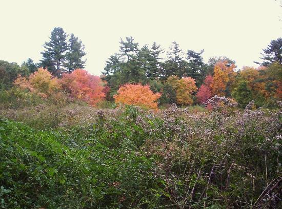 Autumn - Massachusetts