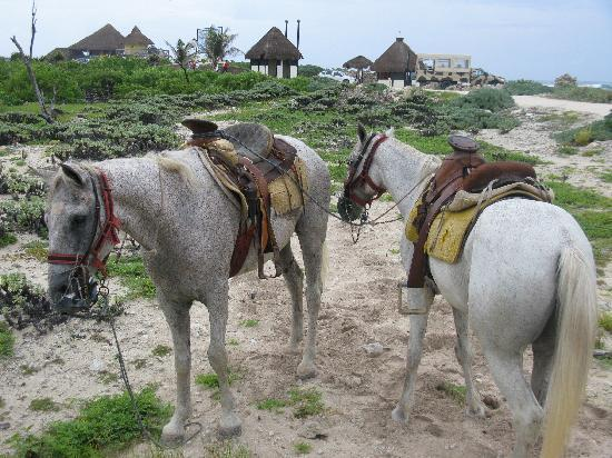 Cozumel Tours: The horses