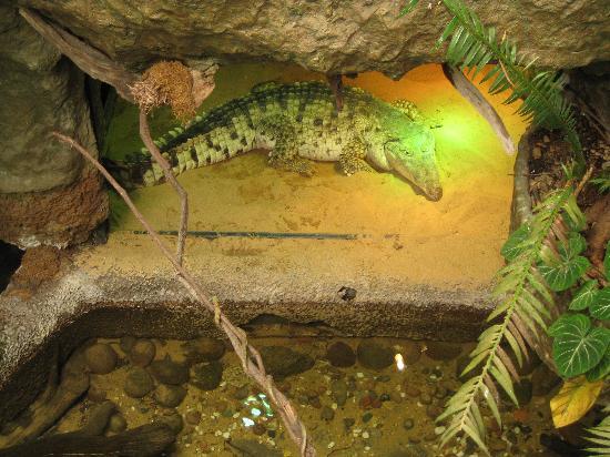 Dallas World Aquarium Crocodile Picture Of Dallas