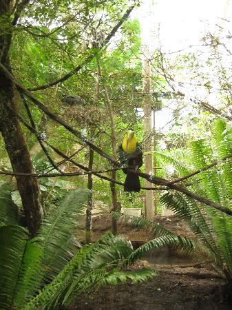 Dallas World Aquarium - Birdies
