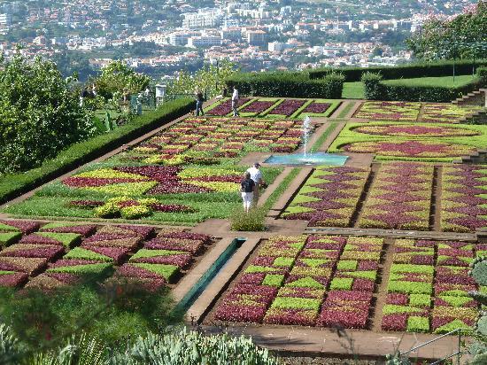 Madeira Botanical Garden : Blumenteppich
