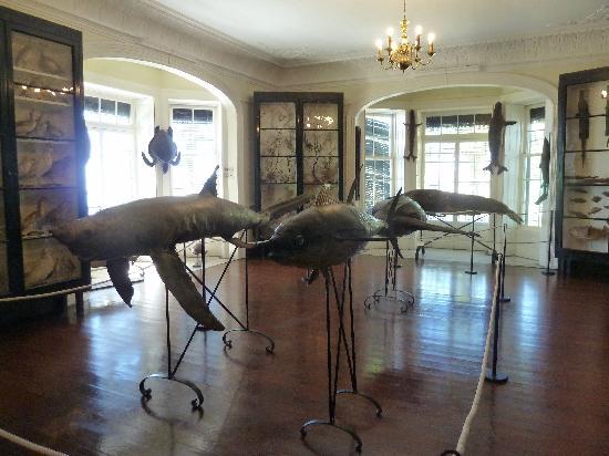 Madeira Botanical Garden : Museum mit ausgestoften Fischen