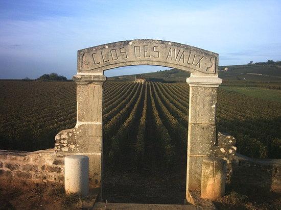 Bourgogne Evasion : Vineyard of Beaune