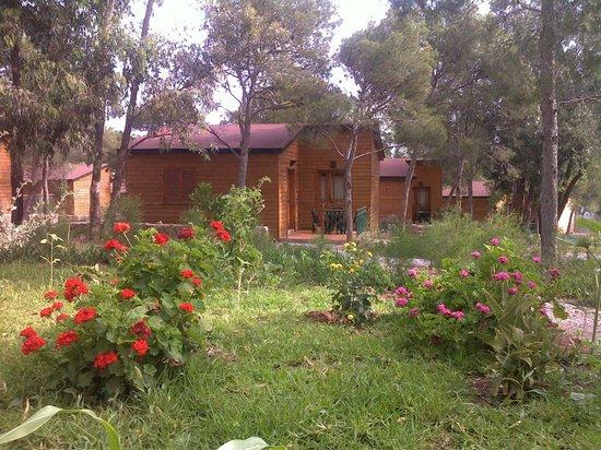 AZZAIfun : Bungalow 7 places (extérieur)