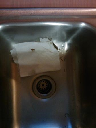 Royal Maggie Inn: Roach found in Sink 2