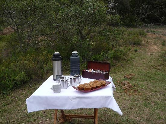 Bush Lodge - Amakhala Game Reserve: Morning coffee