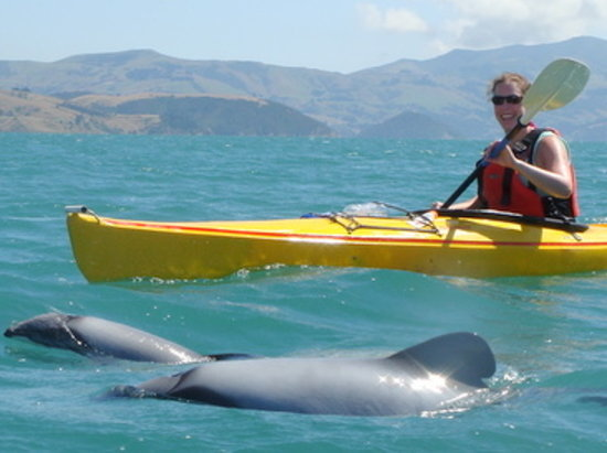 Akaroa Guided Kayak Safari: Hector Dolphins