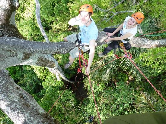 Amazon Tree Climbing: Up the tree!