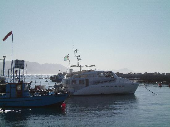 Hermanus, Sør-Afrika: The boat used
