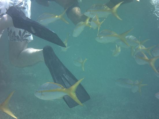 The Original Snorkeling Adventure: Fish and feet