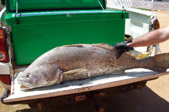 Western Australia, Australia: big fish 80 mile beach