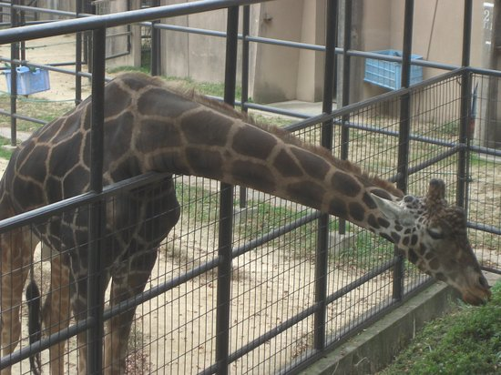 Asa Zoological Park