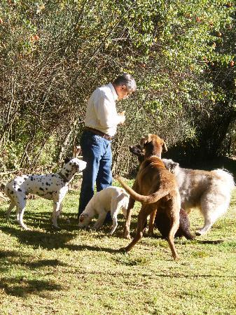 Kuychi Rumi: Gary & the dogs...