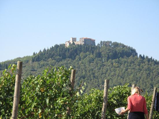 Castello di Montegiove: Harvest below the Castle