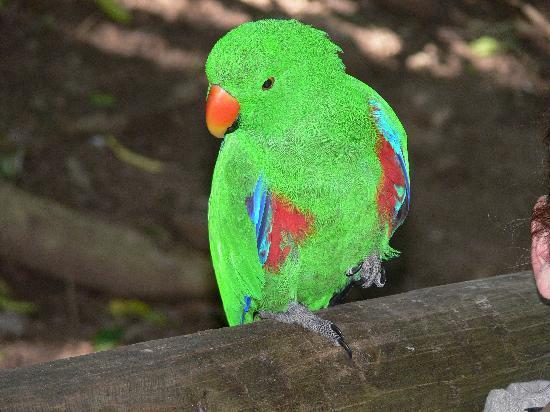 Birds of Eden: Annäherungsversuche.... siehe Ohr rechts ;-)