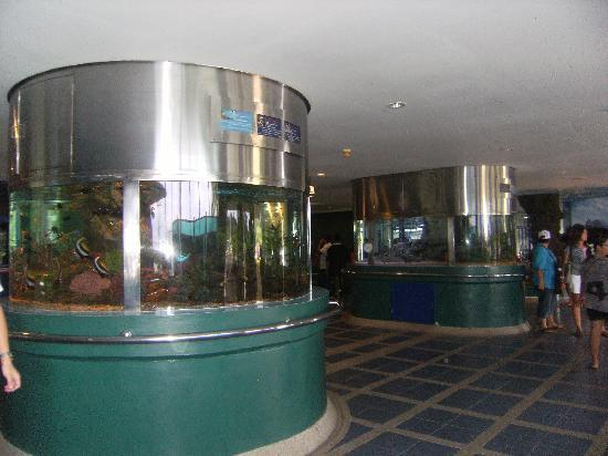 ... ????????? - Picture of Rayong Aquarium, Rayong - TripAdvisor