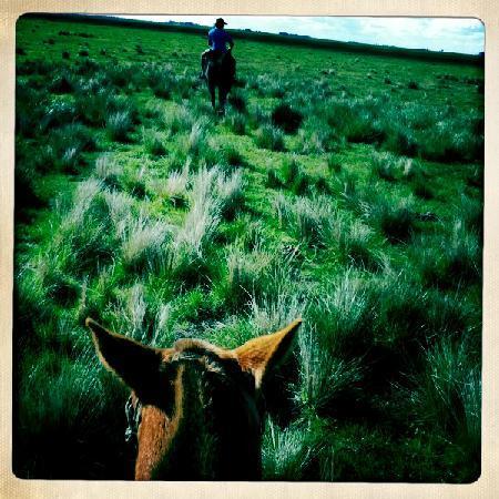 La Margarita Estancia: Horses