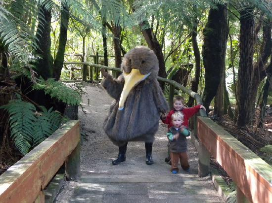 Wander through the Otorohanga Kiwi House Native Bird Park next door to Camp Kiwi Holiday Park