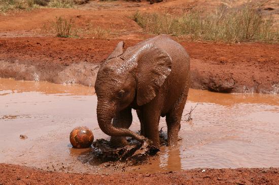 David Sheldrick Wildlife Trust : Playing in the Mud