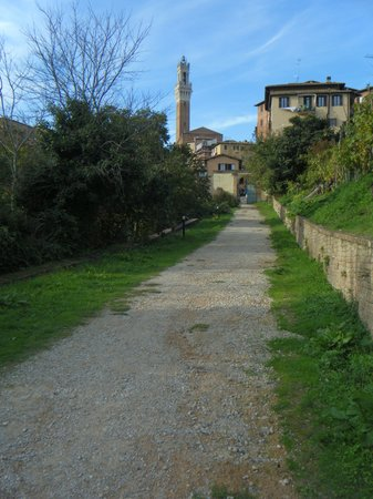 Il viale di accesso all'Orto de' Pecci