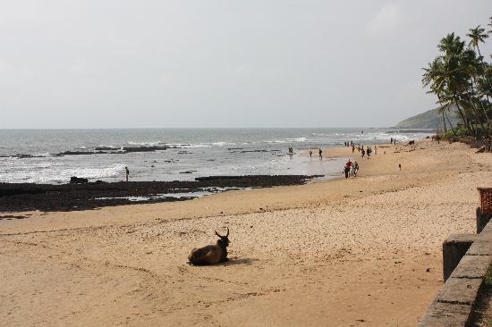 Anjuna, India: Beach