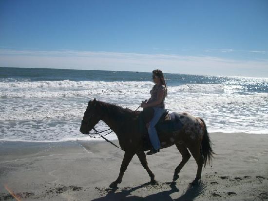 Horseback Riding Of Myrtle Beach Ride