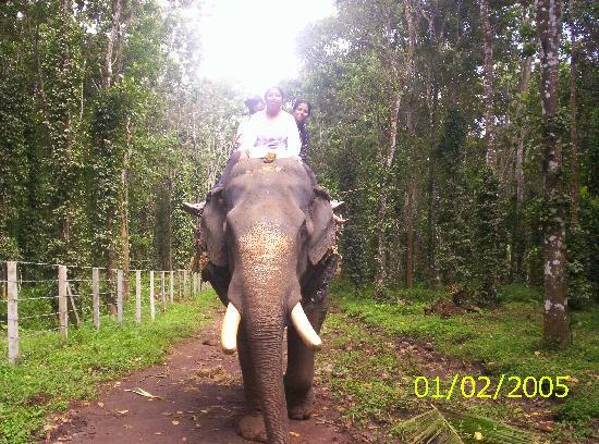 Woodlands Prime Castle : Elephat ride