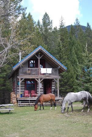 Radium Hot Springs, Canada: Horses outside our cabins