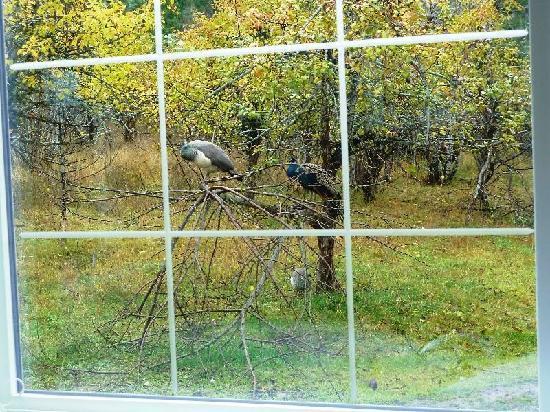 Heron, Монтана: Critters