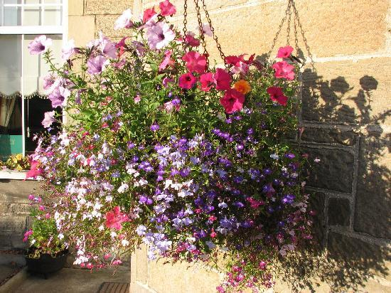 Priory Lodge Guest House: Lovely hanging basket