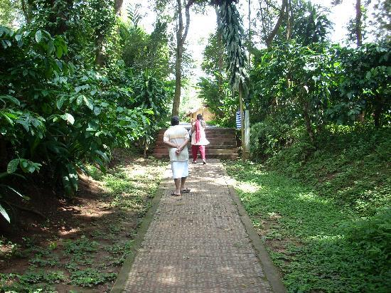 Orange County, Coorg: path leading to OC from the Cauvery river walk